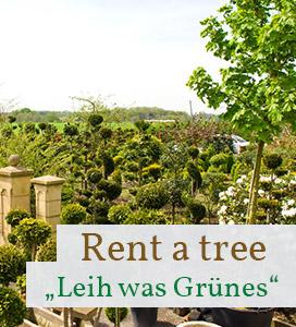 Rent-a-tree-Pflanzen-leihen